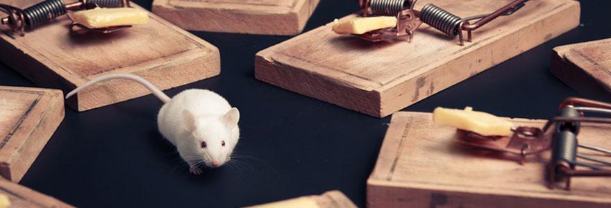 Éliminer efficacement les rats et les souris